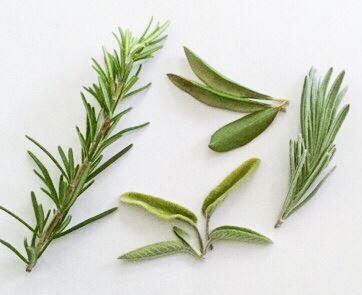 Herbs_photo